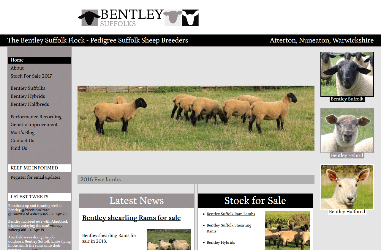 Pedigree Suffolk Sheep Breeders - Bentley Suffolks_ - www.bentleysuffolks.co.uk